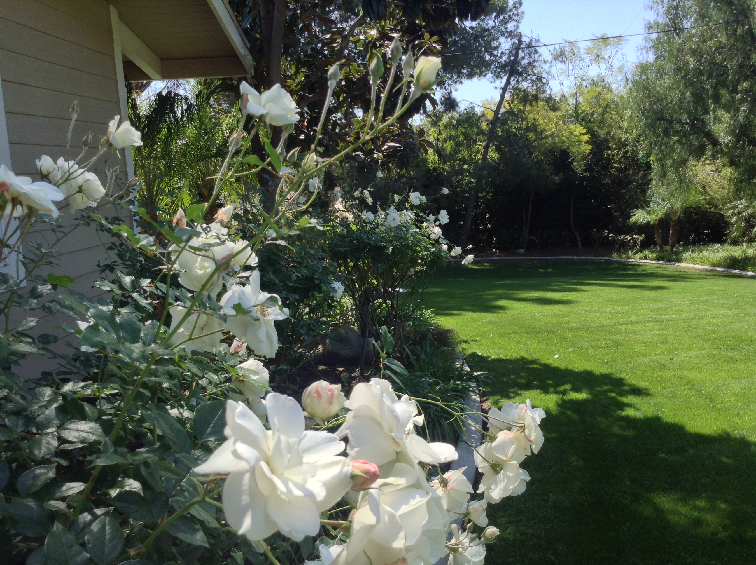 Orange County Landscape Irrigation