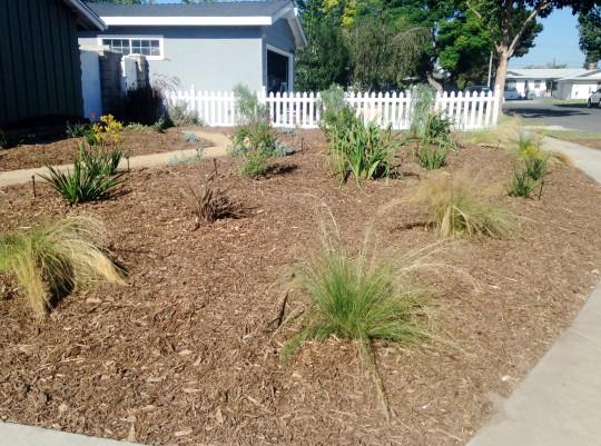 Drought Tolerant Landscape Installation