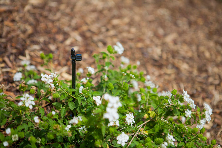 Orange County Drip Irrigation