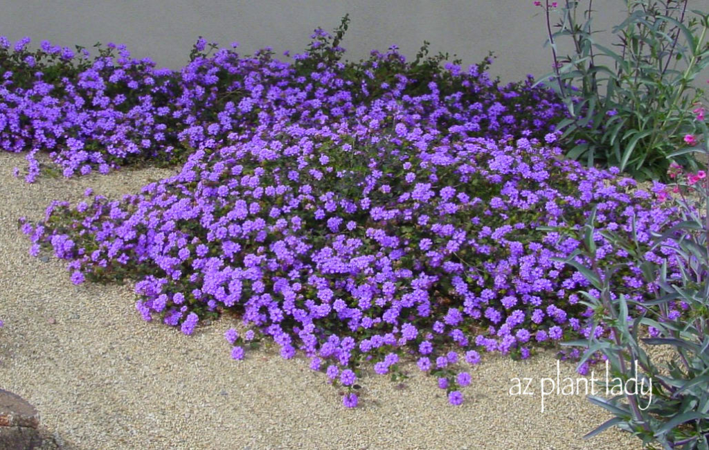 Drought Resistant Plants List