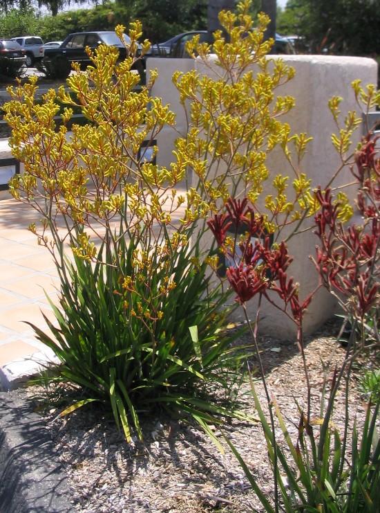 Drought Resistant Archives Orange County Landscape